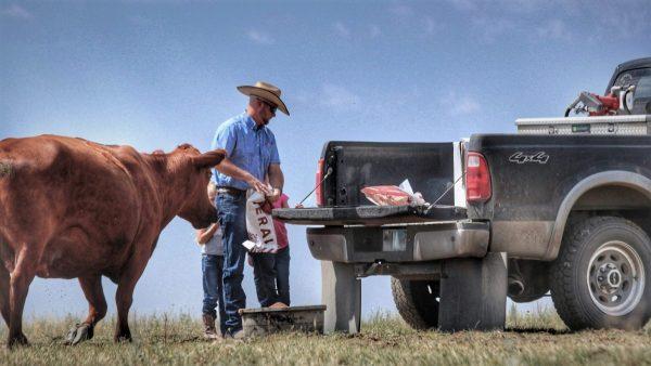 Montana rancher