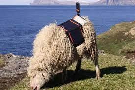 Sheep View